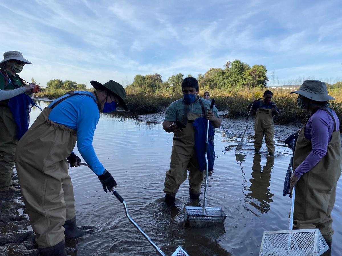 Wild Freshwater Mussel Survey at Kingman Lake