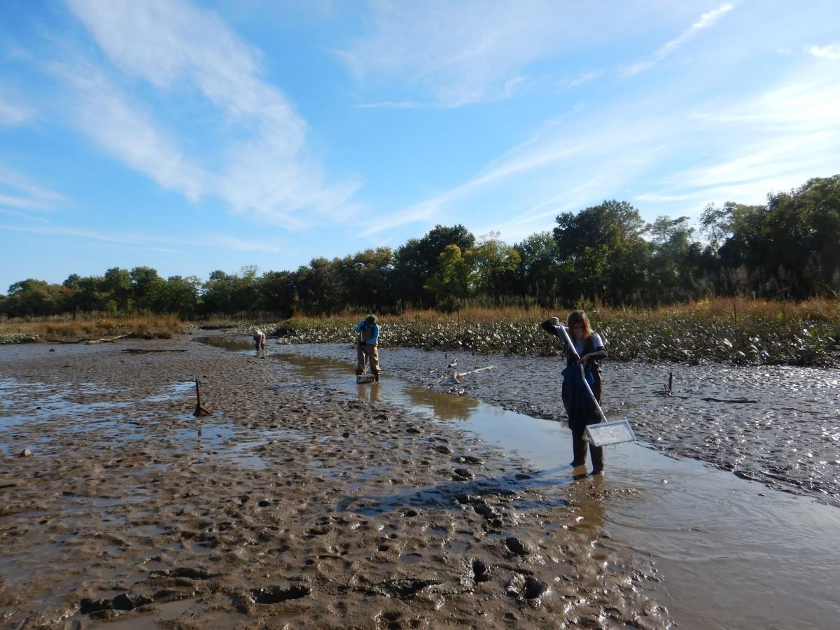 Freshwater Mussel Survey at East Kingman Lake