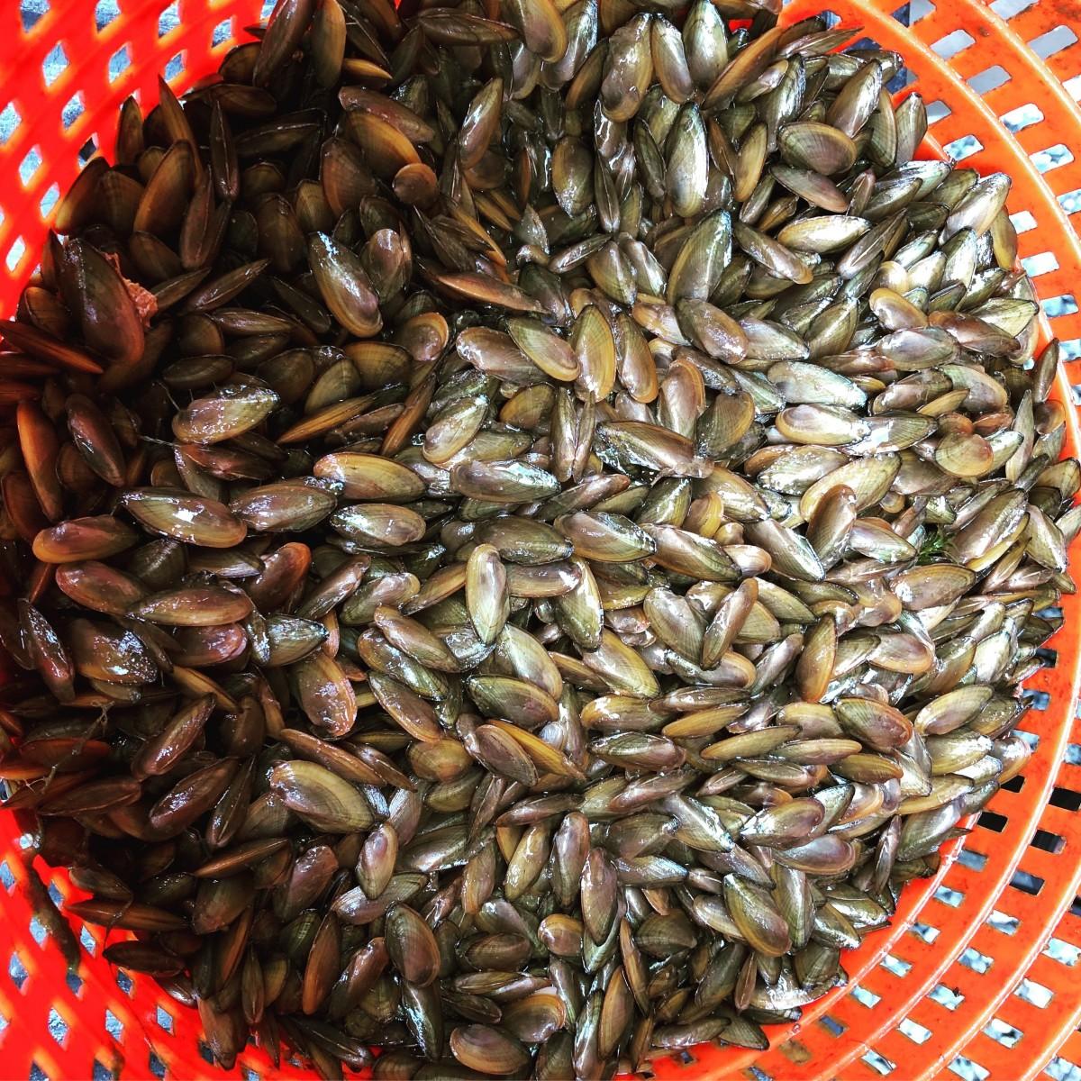 Freshwater Mussel Survey at Kingman Lake