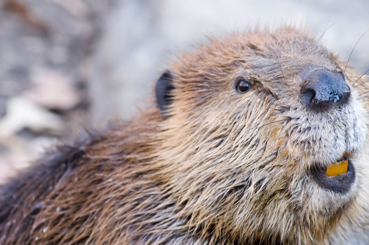 Anacostia River Discovery Series Nature Hike - Mammals