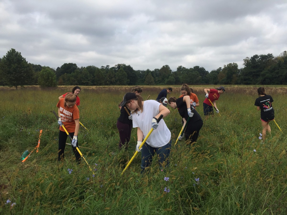 Marvin Gaye Meadow Restoration Workday