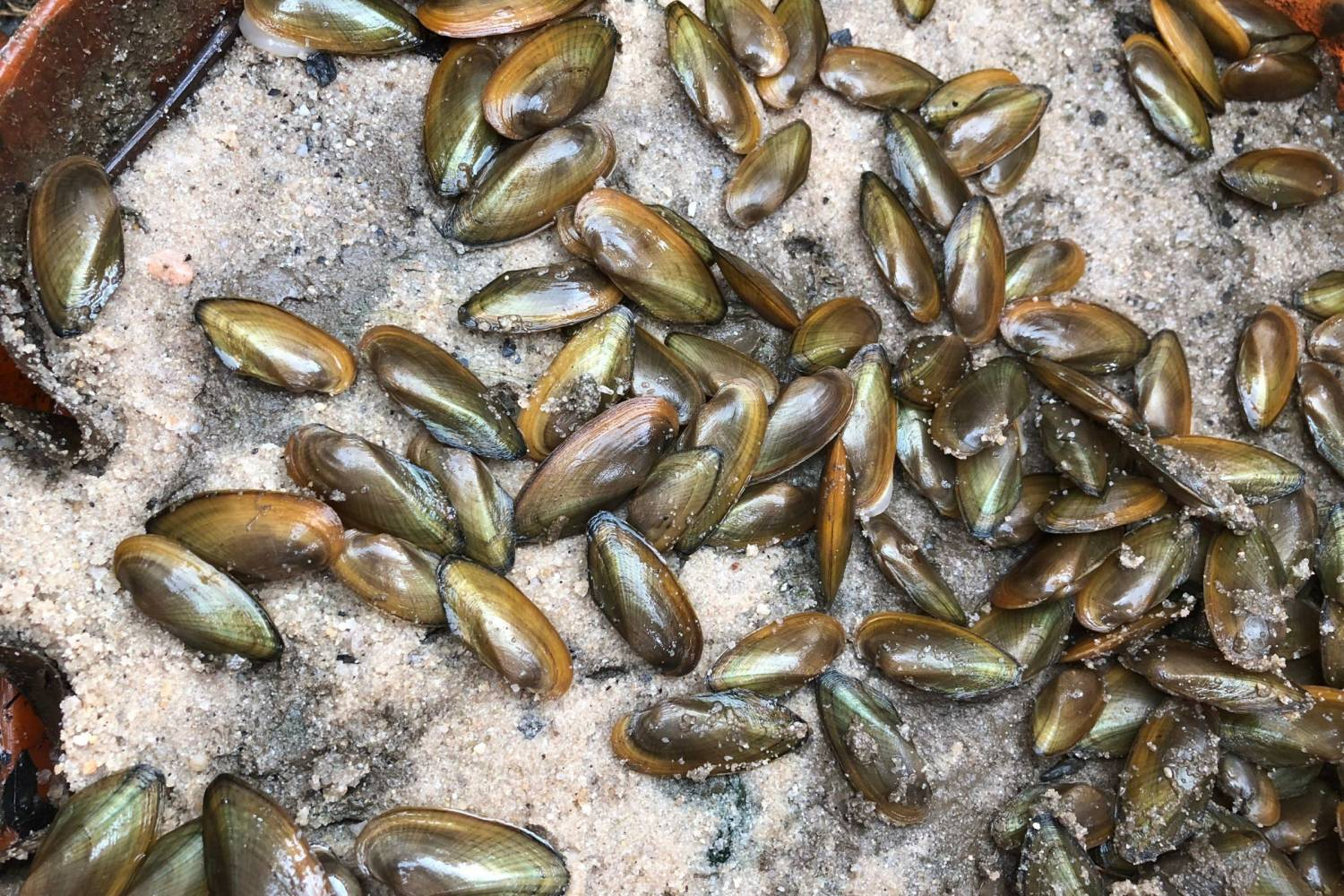 Anacostia River #MusselPower gets a boost