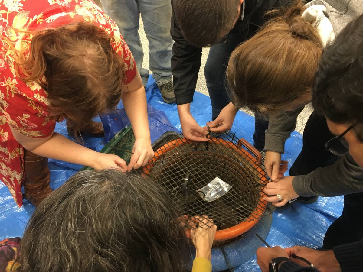 Anacostia River Mussel Power: Teaching the Teachers