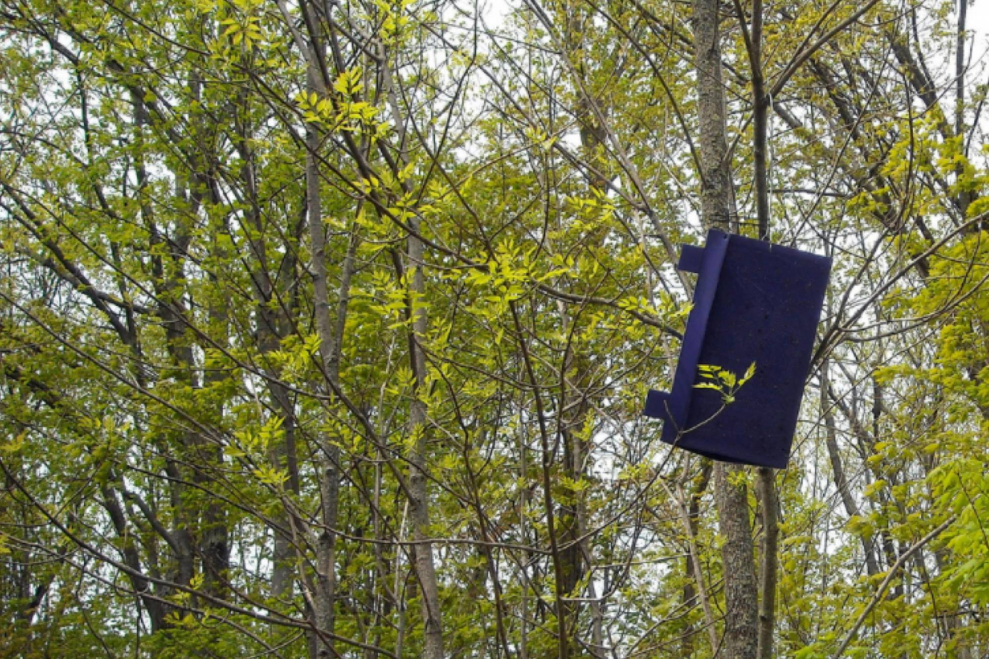 What's that triangular purple box hanging in trees?