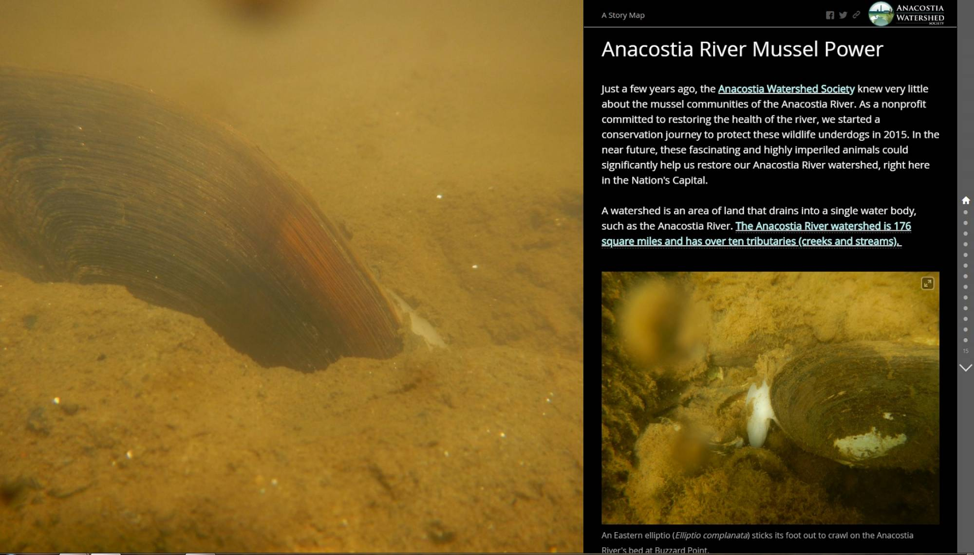 Anacostia River #MusselPower: The Story Map